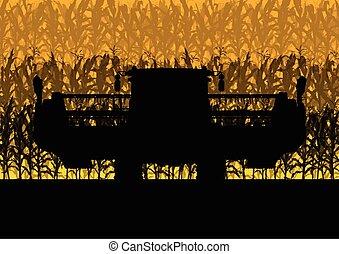 campo cereale, raccolta, con, mietitrebbiatrice, giallo,...
