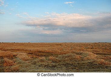 campo, cielo, nublado, heno