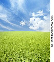 campo, cielo verde