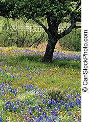 campo, colina flor, tejas, país