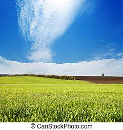 campo, com, grama verde, sob, céu nublado