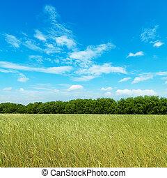 campo, com, verde, cevada, sob, céu nublado