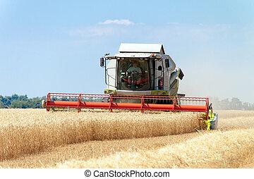 campo, combinar, trigo, trabajando, segador