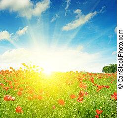 campo, con, amapolas, y, sol, en, cielo azul