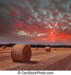 campo, con, mucchi fieno, su, tramonto