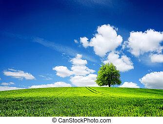 campo, de, capim, primavera, paisagem