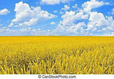 campo, de, dourado, trigo, e, perfeitos, céu azul
