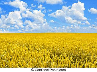 campo, de, dourado, trigo, e, perfeitos, nuvem, céu azul