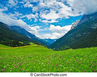 campo de flores, en las montañas