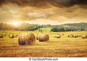 campo, de, freshly, fardos, de, feno, com, bonito, pôr do sol