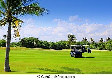 campo de golf, tropical, árboles de palma, en, méxico