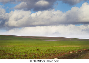campo de la agricultura, verde, naturaleza