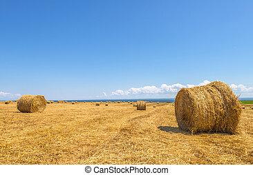 campo de la granja, balas, heno