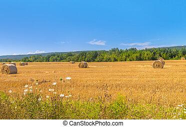 campo de la granja, con, fardos de heno