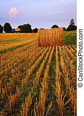 campo de la granja, en, anochecer