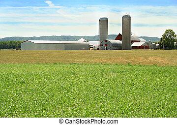campo de la granja, verde