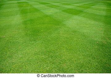 campo de la hierba
