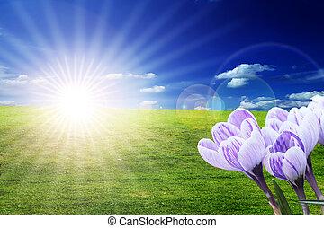 campo de la hierba, con, flores