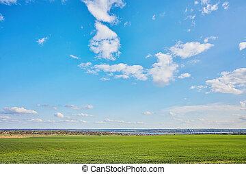 campo, de, verde, fresco, pasto o césped