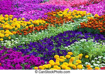 campo, diferente, flores