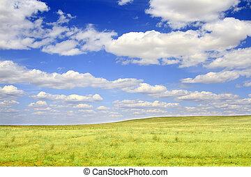 campo, en, un, plano de fondo, de, el, cielo azul