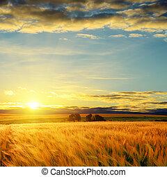 campo, encima, nubes, ocaso, cebada