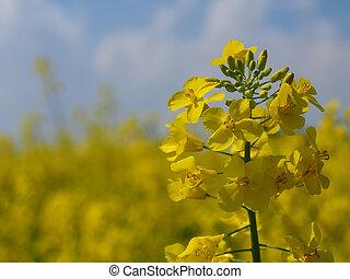 Fiori Gialli Nei Campi.Campo Di Fiori Images And Stock Photos 37 Campo Di Fiori