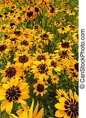 campo, fiori, giallo, grande