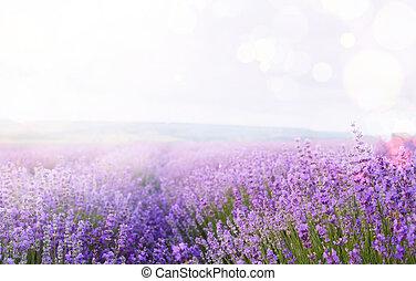 campo, flor, sky.