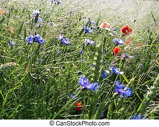 campo, flores
