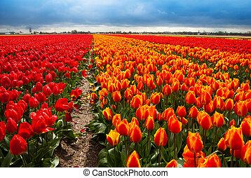 campo, flores, plano de fondo