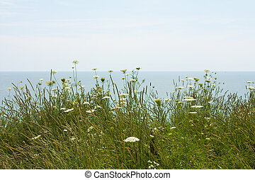 campo, flores, por, el, lago