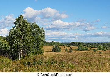 campo, floresta