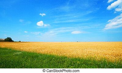 campo frumento
