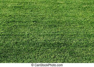campo, futbol, pasto o césped, verde, textura
