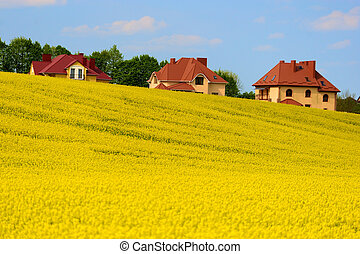 campo giallo, con, casa nuova