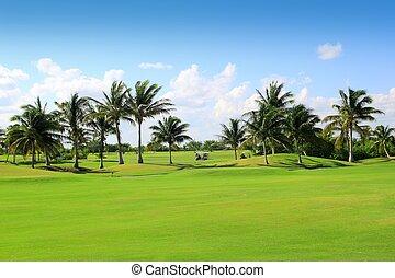 campo golfe, tropicais, coqueiros, méxico