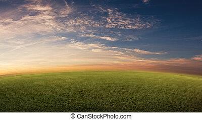 campo, herboso