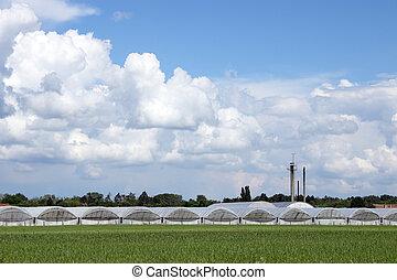 campo, industria, Agricultura, invernadero