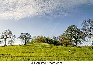 campo inglés, en, primavera