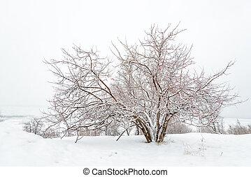 campo, invierno, blanco, congelado, sky., árbol