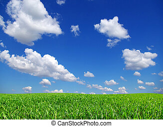 campo, ligado, céu