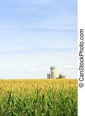 campo maíz, con, silos