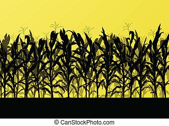 campo maíz, detallado, campo, paisaje, ilustración, plano de...