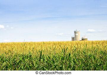 campo, maíz, silos