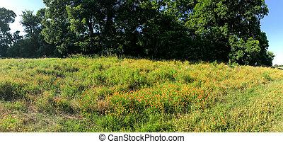 campo, manta, florecer, alto, primavera, indio, coppell, ...