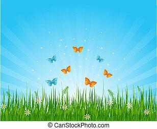 campo, mariposas, herboso