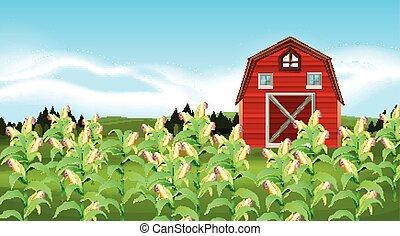 campo, milho, cena