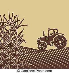 campo, milho, trabalho, ilustração, agrícola