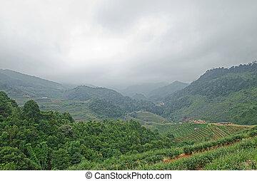 campo, nebbia, paesaggio, tè